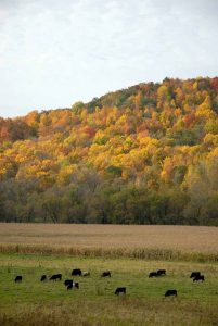 Kickapoo Valley in the fall